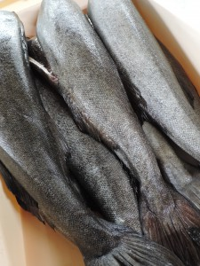 おせち作り -銀鱈西京焼き-